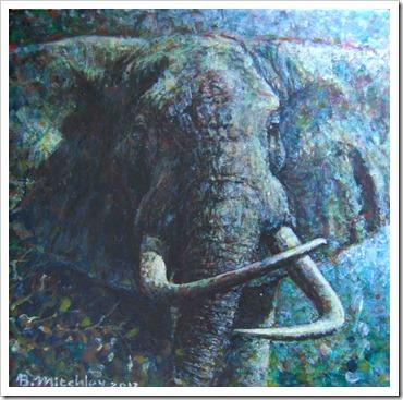 Big Haaktand elephant