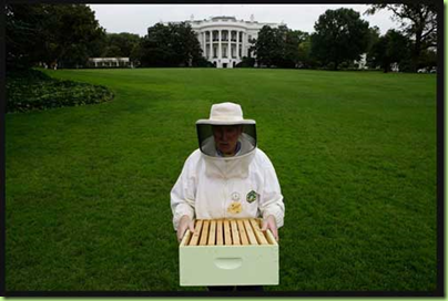 whitehouse bees2