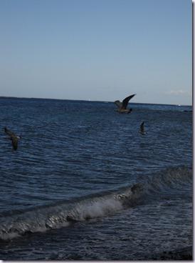 Lanzarote mare 097