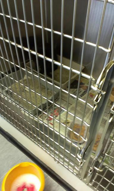Clean cat cage