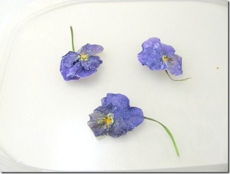 edible violas