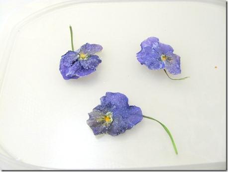 edible violas