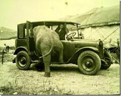 cars,vintage,car,animal,animals,badass,bw-c84b0806e19882e9aaa2b75935e6eaf6_h - Copy