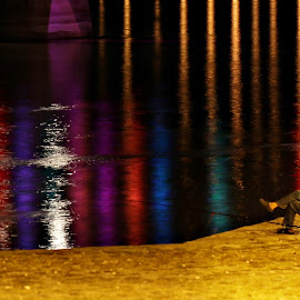 On the river by Ivana  Todorovic - City,  Street & Park  Night ( water, colors, night, fisherman, river )