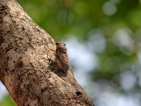 18. Cicade.JPG