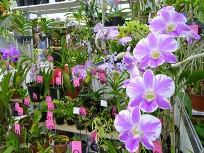 Exposição de orquídeas 2014
