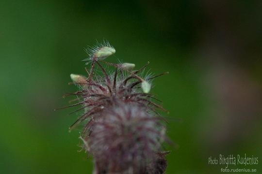 macro_20110724_seeds