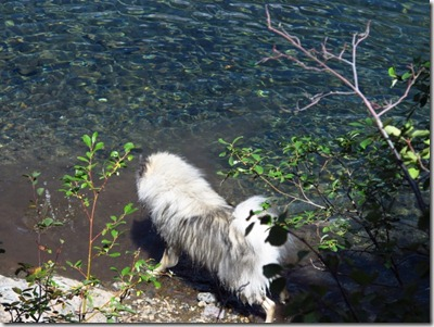 626 water dog (640x480)