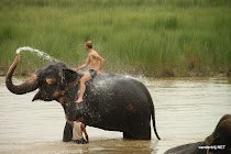 Me getting a shower from an elephant in a river in Chitwan National Park, Nepal
