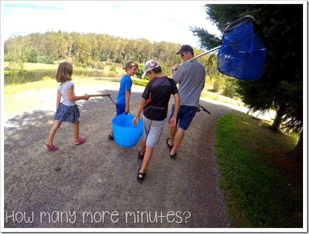 How Many More Minutes? ~ Mountain Stream Fishery & Free Camping in Scottsdale, Tasmania