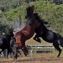 It's On  by Kim Davis - Animals Horses
