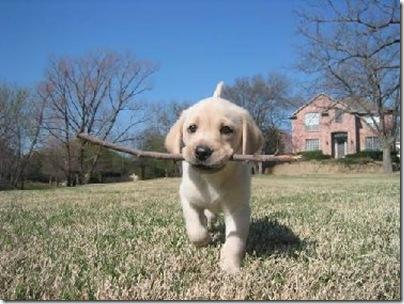 Animal cãoengraçado (2)
