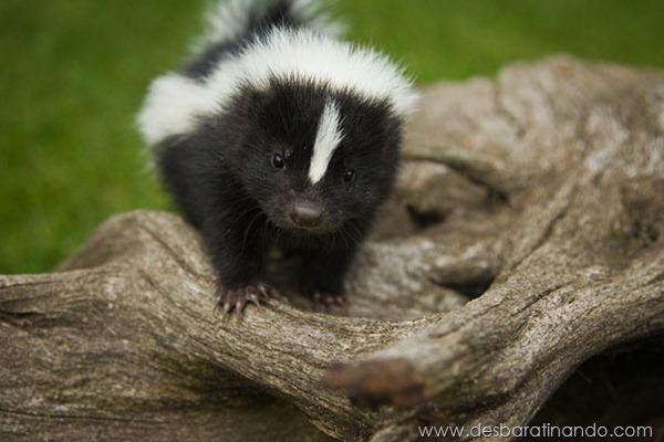filhotes-de-animais-fotos-cute-cuti-desbaratinando (20)