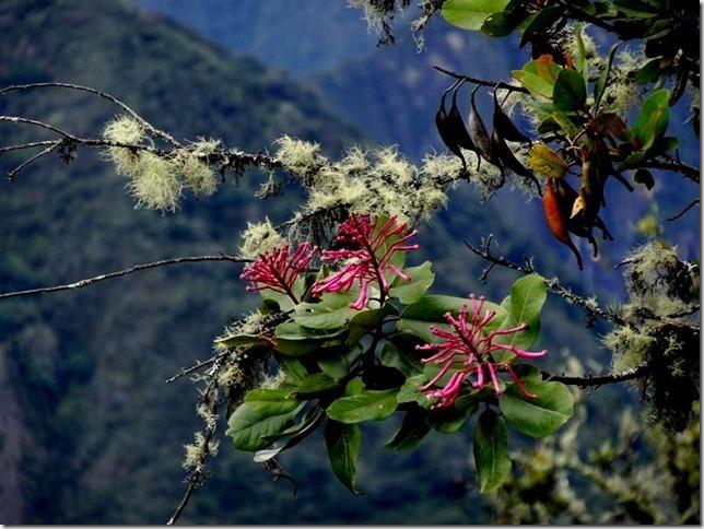 Machu_Picchu_DSC02159
