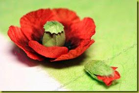 Маки: цветок и бутон