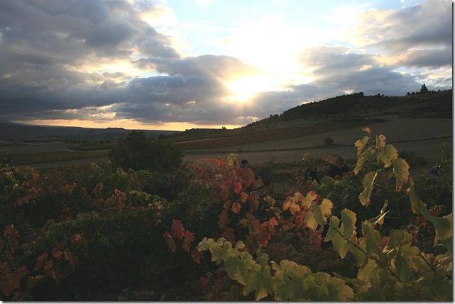 vinhedos-finca-allende-peninsula-vinhos