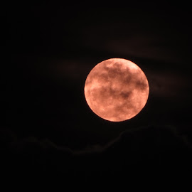 Blood Moon  by Lauren Curtis - News & Events Science ( moon, red, cloudy, full moon, night,  )