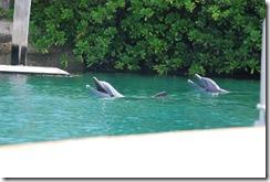 Bahamas12Meacham 456
