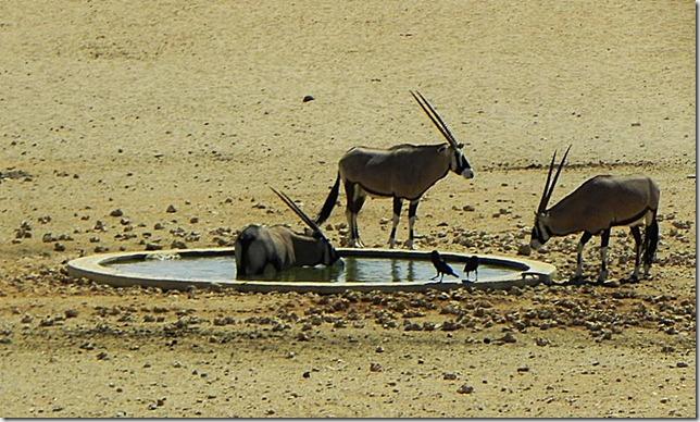Namibia_DSCN5751