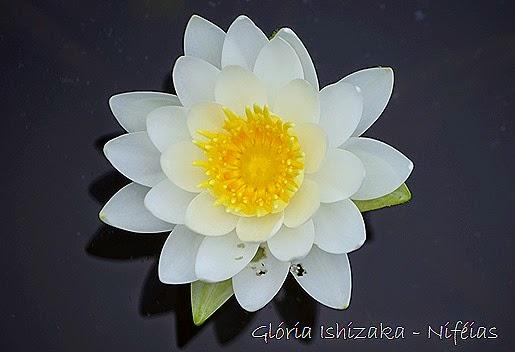 Glória Ishizaka - flores 95