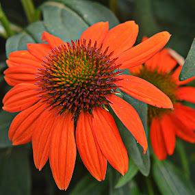 ----------A Wal Mart Beauty---------- by Neal Hatcher - Flowers Single Flower (  )