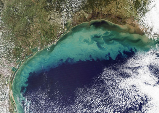 Satellite views of an algae bloom spanning the Gulf of Mexico. Photo: via NPR