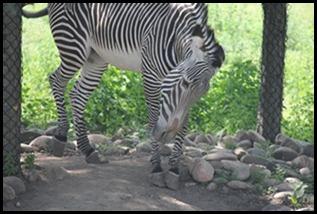 Zoo5 059