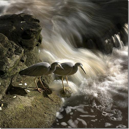 Wildlifephotographybird24_thumb1