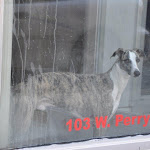 That Doggie In The Window.jpg