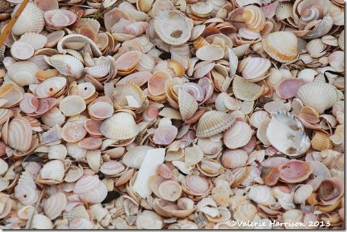 22-shells