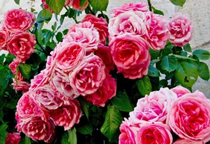 loches-roses_edited-1