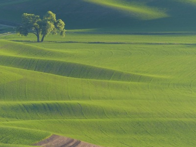 12 The Palouse 056