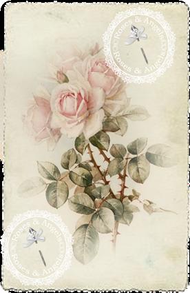 Skira rosor