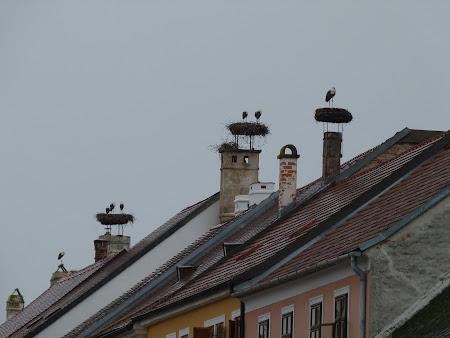 Imagini Austria: cuiburi de barza in Rust, Burgenland