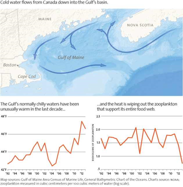 Cold ocean water flows from Canada into the Gulf of Maine. The Gulf's normally cold waters have been unusually warm in the last decade, and the heat is wiping out the zooplankton that support its entire food web. Graphic: Karen Minot