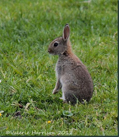 21-bunny