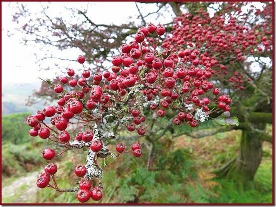 2822berries