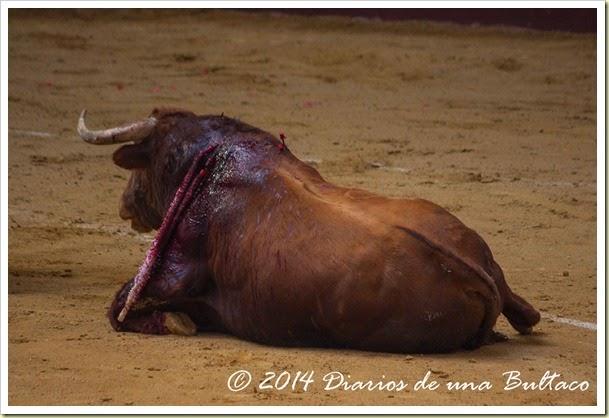 Toros 2014 (2)-35