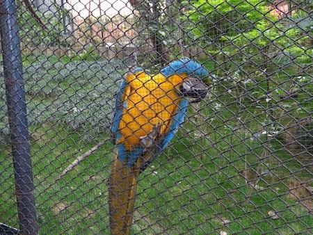 Anul Nou Chinezesc: Papagal