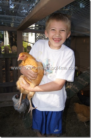 Backyard Chickens:  Buff Orpington