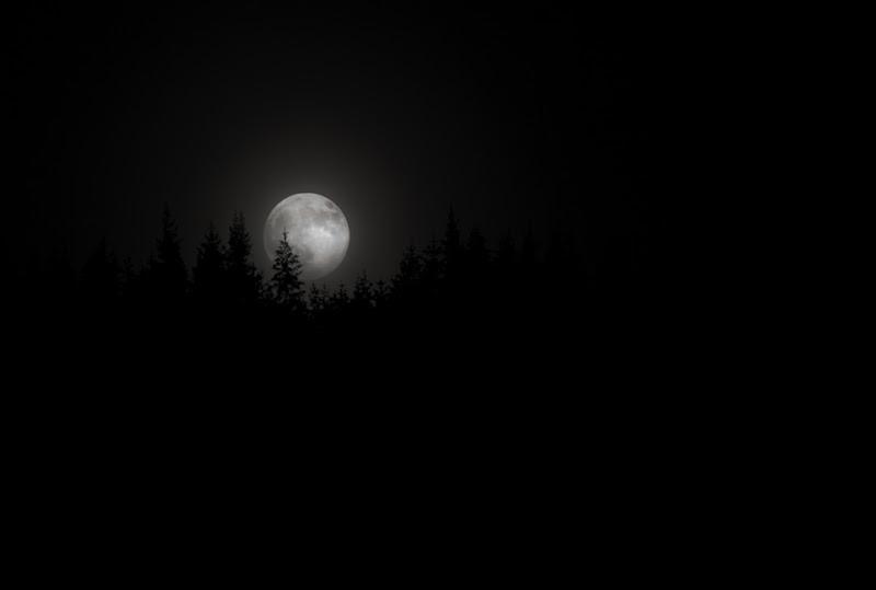 Måne over trær