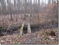 Skoven i januar