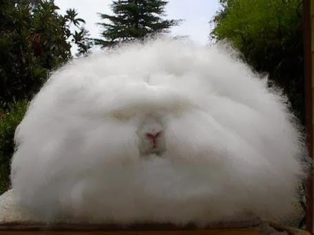 اغلي واغرب ارنب العالم (ارنب
