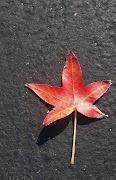 colorful-leaf.jpg