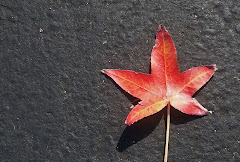 colorful-leaf.jpg