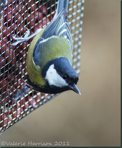 4-greattit