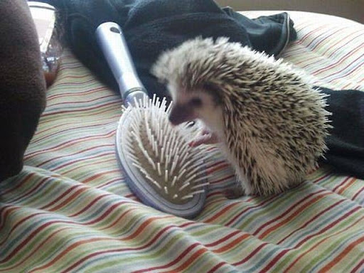 hedgehog-in-love_thumb