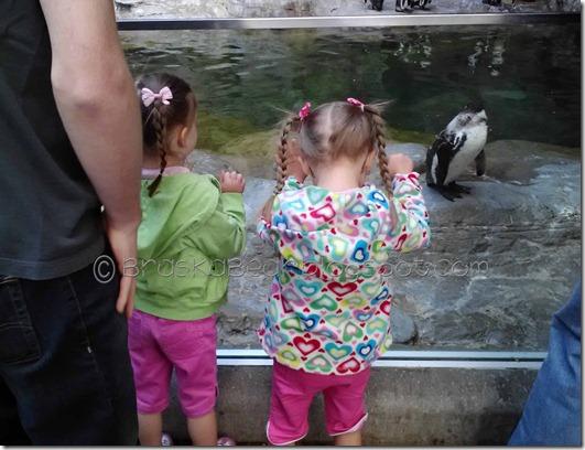 zoo-sisterspenguin