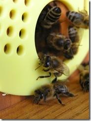3,9,2011 včelí hoblování 355