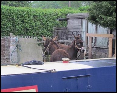 C donkeys